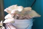 cropped-oyster-bucket.jpg
