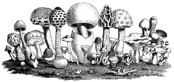drawingmushrooms