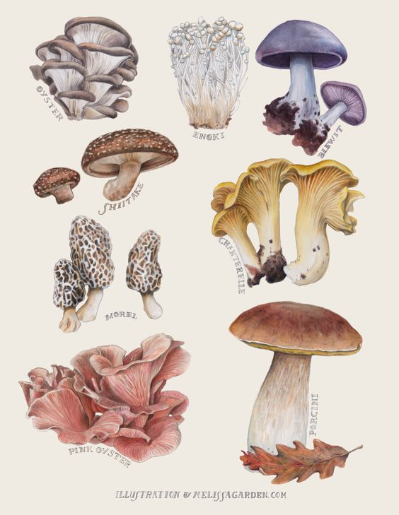 Edible Mushroom Catalog Created for Edible East Bay Magazine