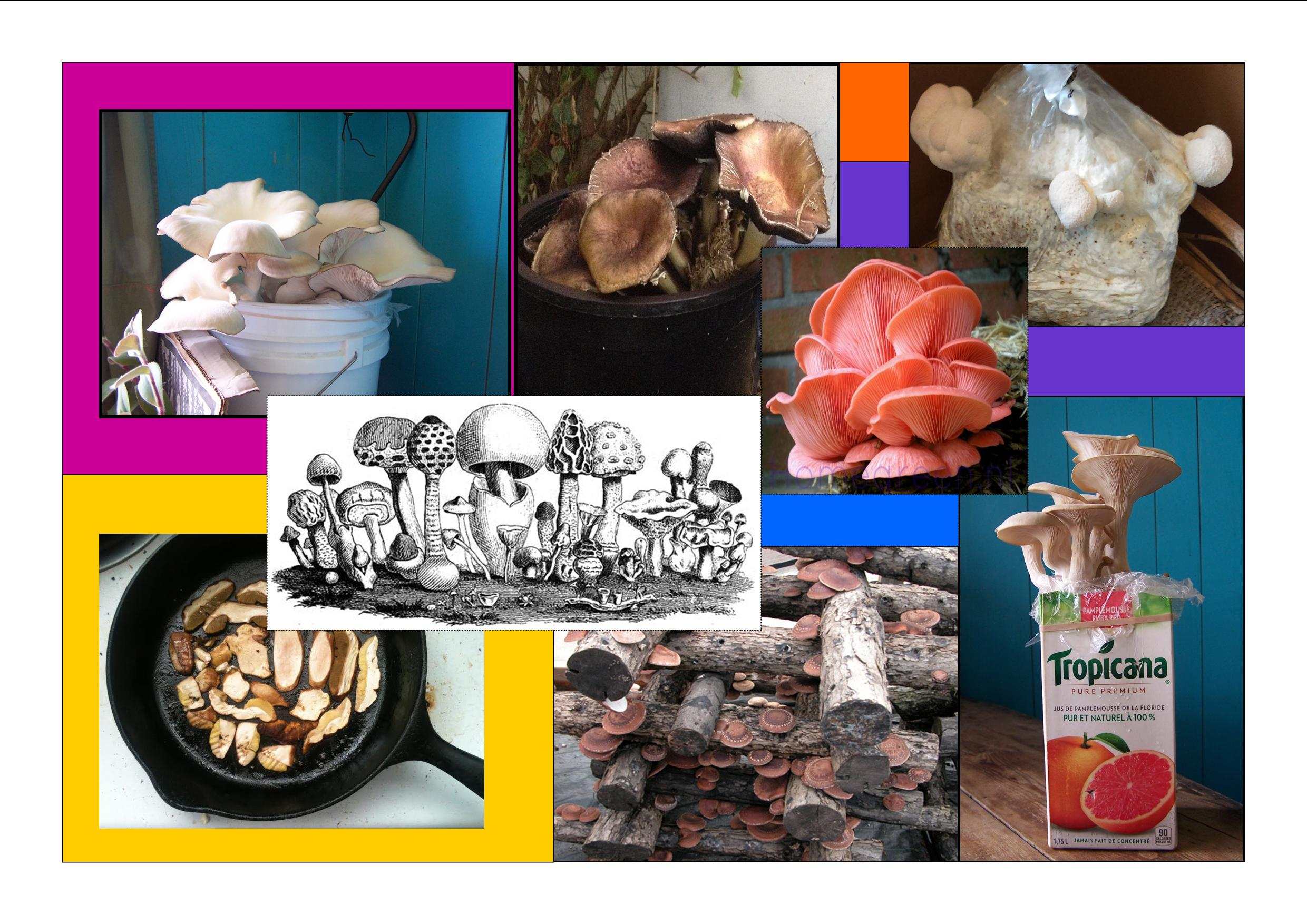 Mushroom Workshop collage2